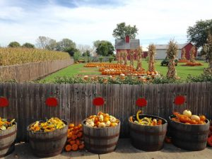 jonsons apples in baskets in front of a fence with pumpkins in the background