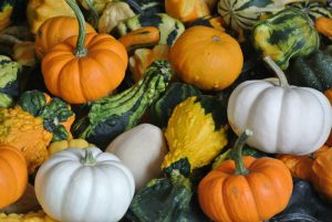 assortment of small pumpkins and gords